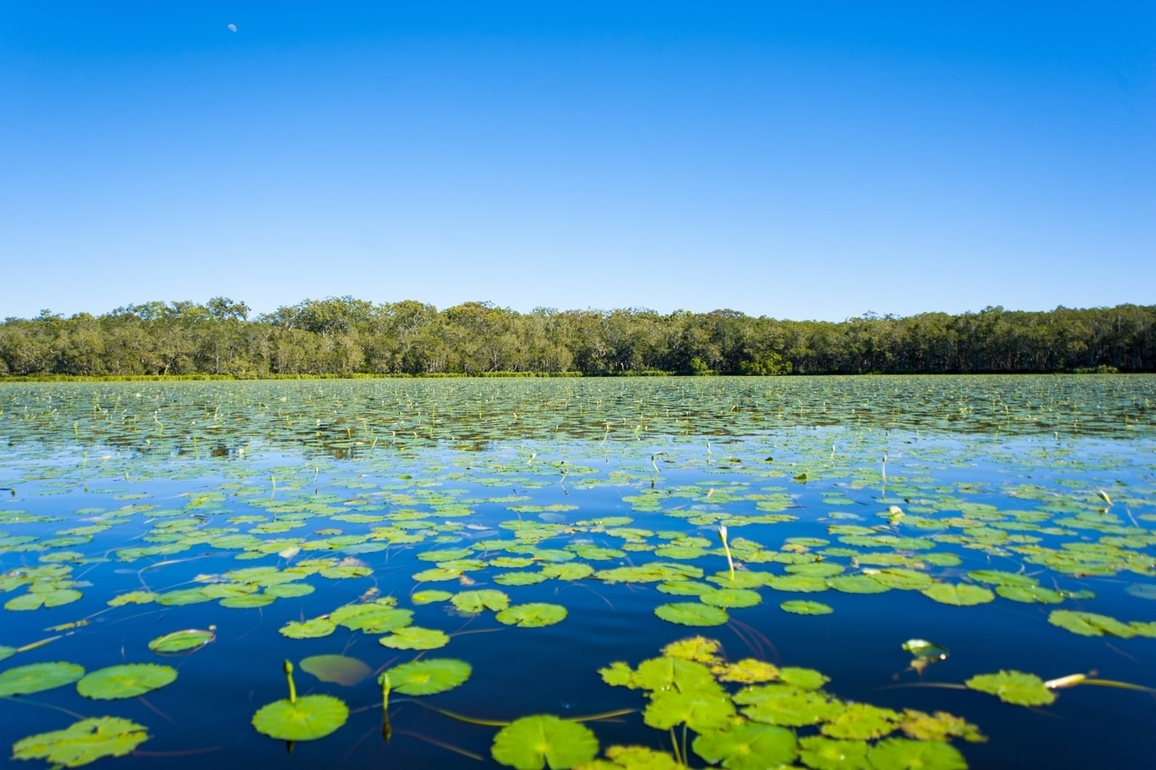 Noosa everglades, one of the best things to do around and near noosa.