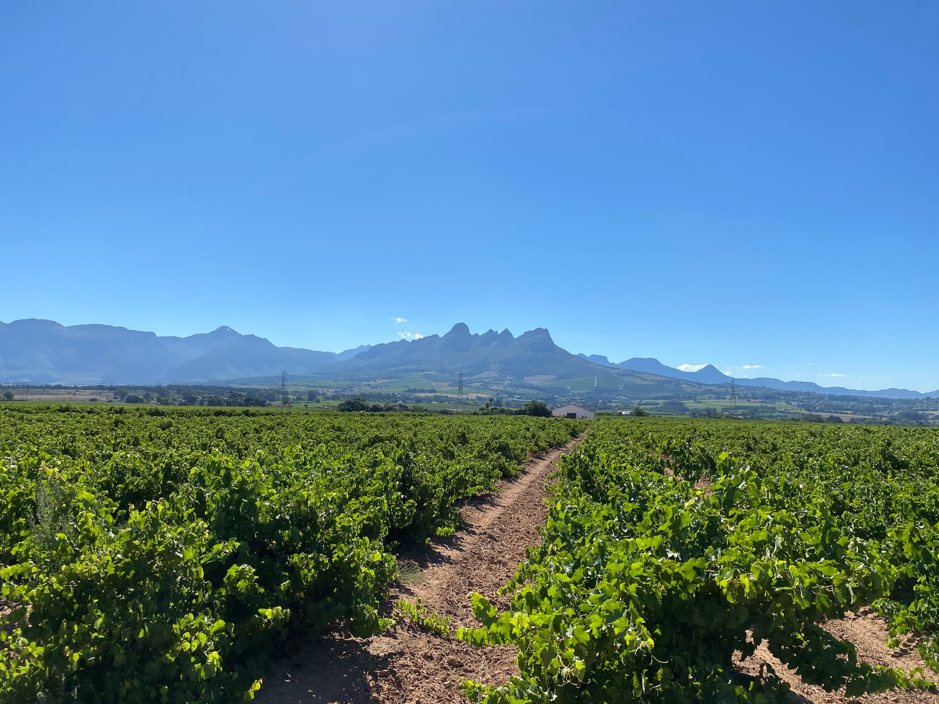 Vineyards and mountains in South Africa