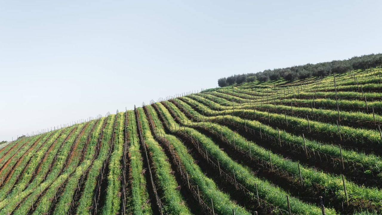 Winery tours in Stellenbosch South Africa